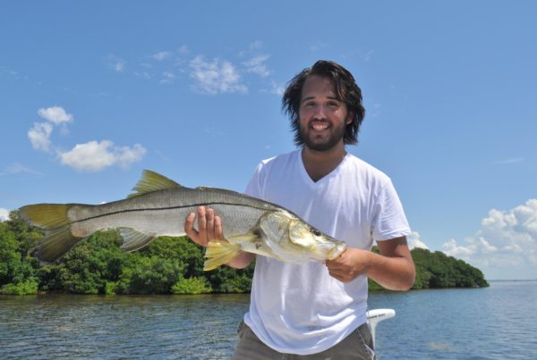 a picture of a fisherman holding a snook caught in Tampa Bay