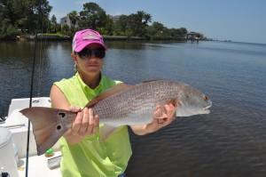 Bull redfish caught during the 2014 PHSC fishing tournament