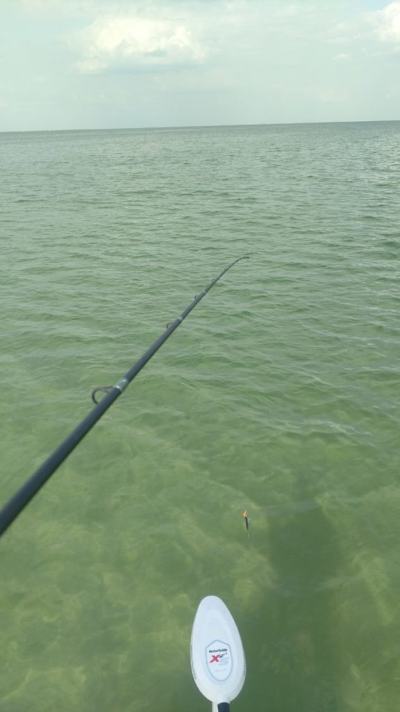 Fishing reports capt jason dozier for Fishing report bay area