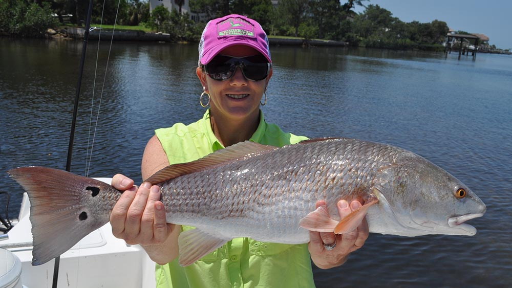Client holding redfish caught in Tampa Bay