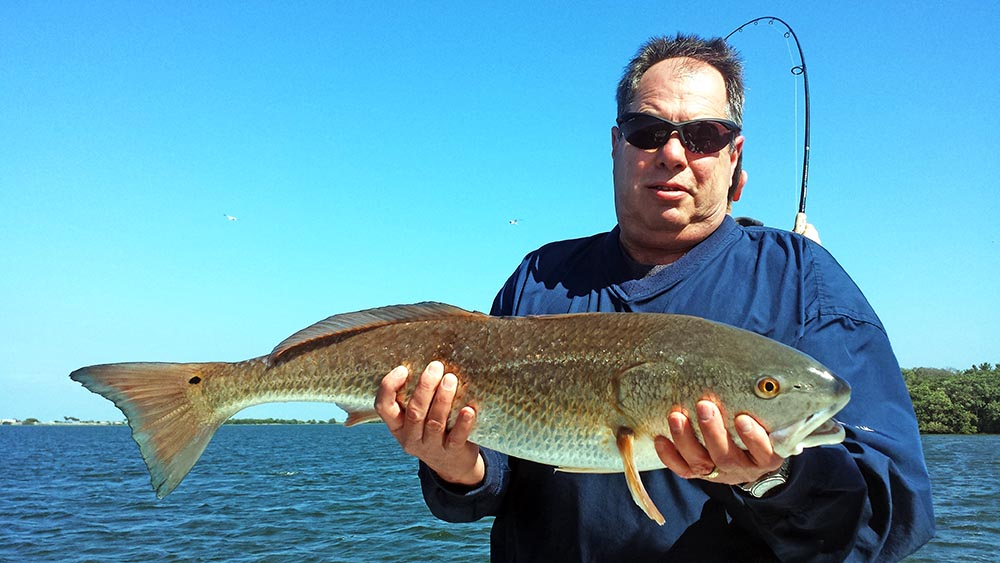 tampa-bay-redfish